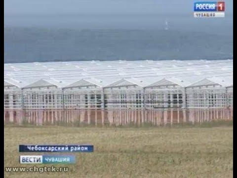 Огурцы и томаты круглый год: в Новочебоксарске строят грандиозный  тепличный комплекс