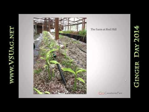Bill Cox Growers Experience with Ginger