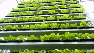 Vertical hydroponic farming ideas
