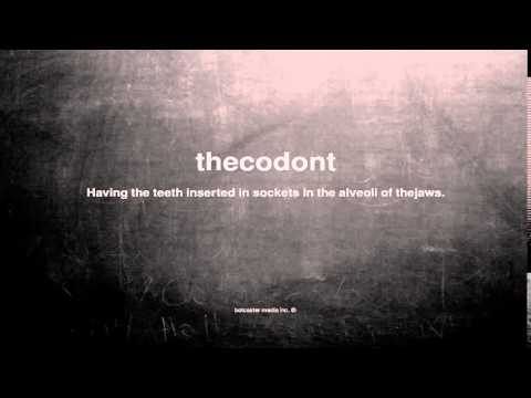 What does thecodont mean