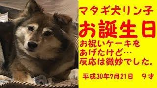 平成30年7月21日はマタギ犬リン子の9歳の誕生日です。予約して買ったワ...