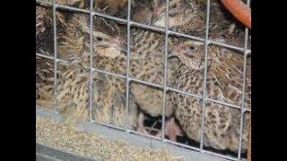 птицы несут яйца заработок, заработок в интернете в грн