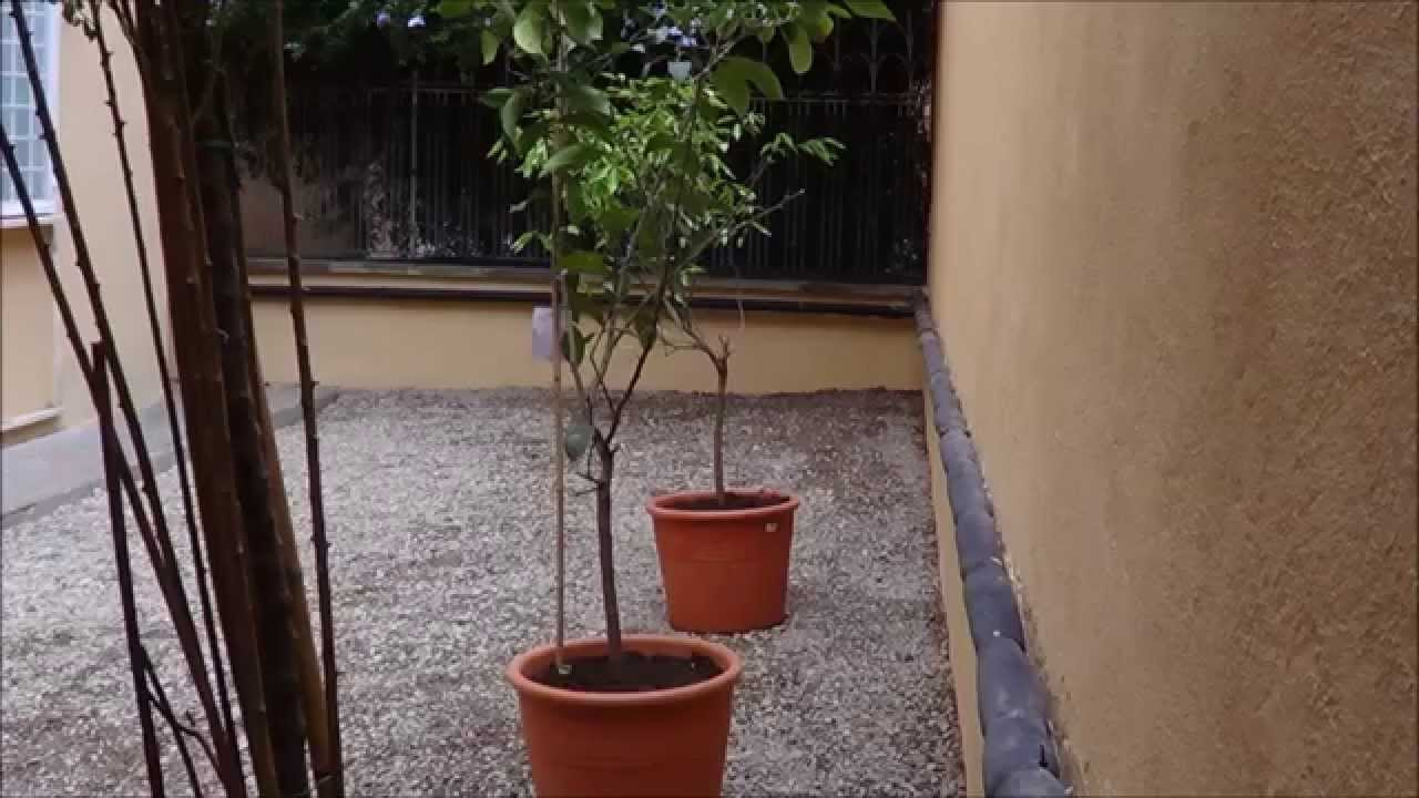 Come Costruire Un Giardino Di Ghiaia : Giardini di ghiaia youtube