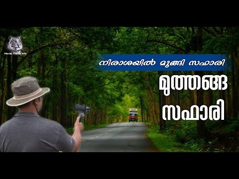 Jeep Safari to Muthanga Forest - Complete information