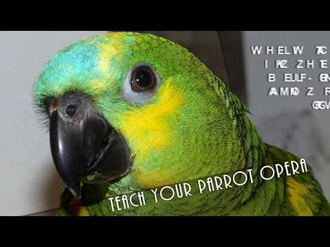 Teach Your Parrot Opera - Mozart's The Magic Flute - Queen of the Night