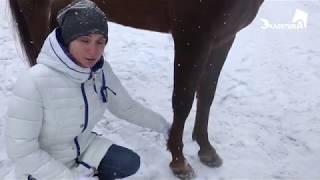 Выбор лошади для конных пробегов. Онлайн школа и лагерь Эклектика