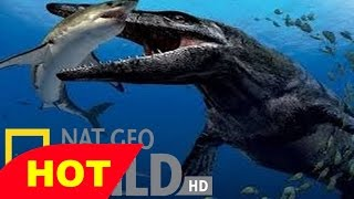 Hooked Monster Fish  Monster Quest   Giant Killer Fish   History Documentary Films