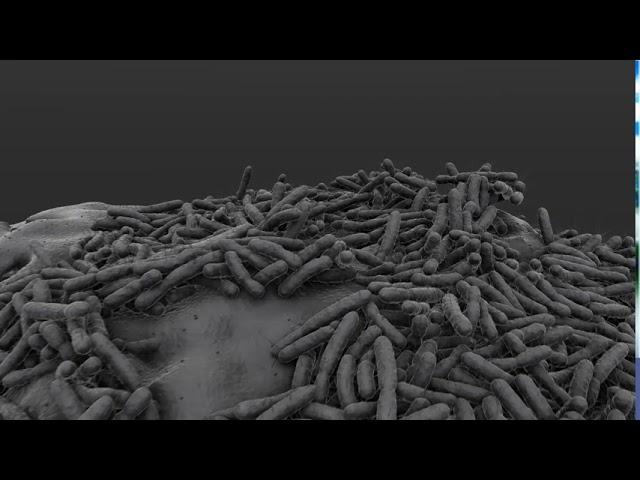 Bacterial Zoom!