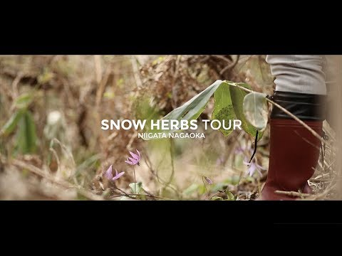 SNOW HERBS TOUR / 山菜ツアー  - SUZUVEL