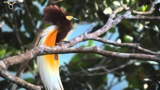 The Return of Johnny Windwalker - Joey Fehrenbach (Dance of the Birds)