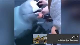 فيديو طريف لحوت يعيد جهاز هاتف سقط من أحد السياح في الماء