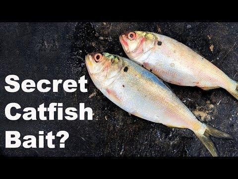 Secret Catfish Bait