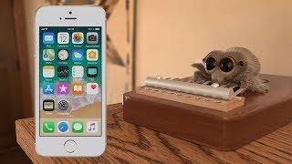 Lucas the Spider plays iPhone ringtones!