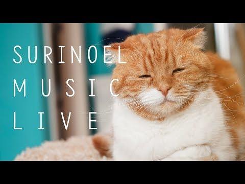 수리노을과 함께 음악 힐링 방송 19.5.18 LIVE 【SURI&NOEL】