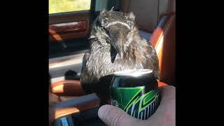Ворон птица умная