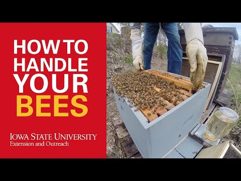 How to Handle Bees in Beekeeping