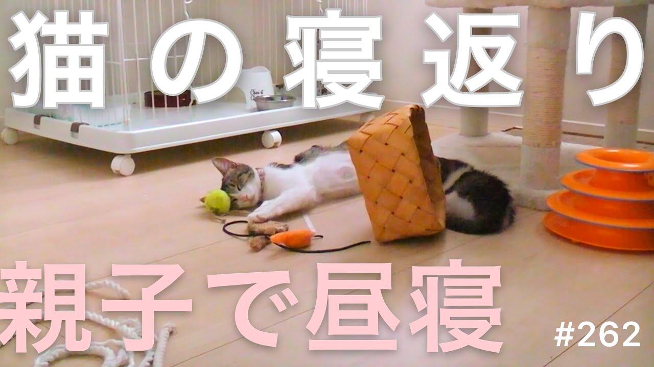 子猫の日常動画 262 猫の寝返り🐱 親子で昼寝中😻💤 おもちゃに囲まれてそのまま寝落ち😻