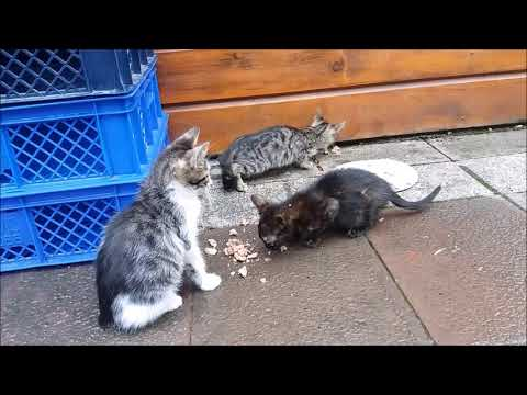 Cute kittens so hungry after rain