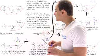 Mechanism of Chymotrypsin and Catalytic Triad thumbnail