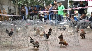 Kỹ thuật nuôi gà, kỹ thuật nuôi gà thả vườn, gà tre, gà con - Máy băm nghiền đa năng 3A