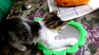 Я пушистый беленький котенок!