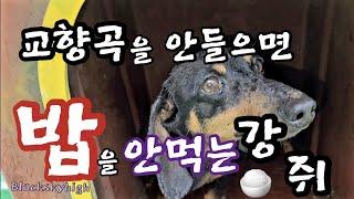 [피아노]쇼팽/즉흥환상곡/닥스훈트