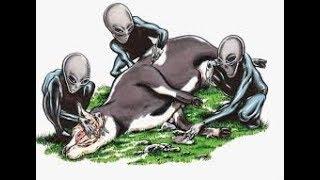 mutilation de bétail