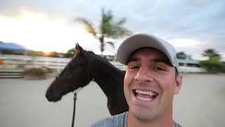 Jumanji AND Finch in one video! TWO EDI HORSES