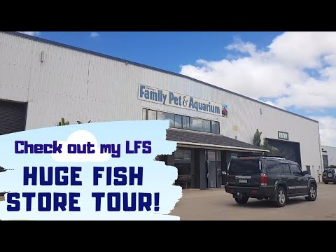 Huge Fish Store Tour Family Pet Aquarium Lfs Tour Youtube