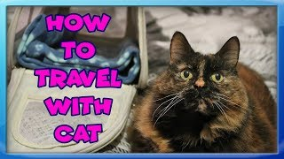 How To Travel With Your Cat! Tips For Travelling With Cats! How To Set Up a Car For Cat Travel