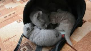 Дневник котят #2 | День 17 - Котята исследуют мир