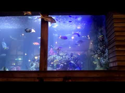 Islamorada Fish Company In Victoria Gardens