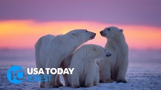 7 places to see polar bears in the wild  | 10Best