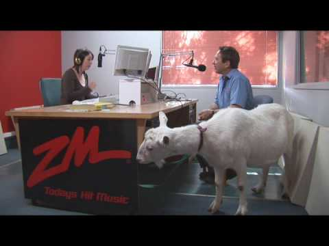 Ideal Goat Has Interview With ZM Radio Station
