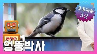 날아다니는 동물에는 어떤 것이 있을까요? | 초등3학년…