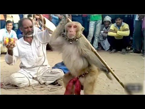 Indian Monkey Street Funny Video In Kannada Comedy Adda