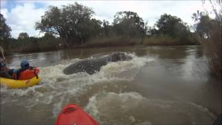 LUGENDA Expedition 2012 - Hippo Attack (fortunately with Happy Ending) [HD]