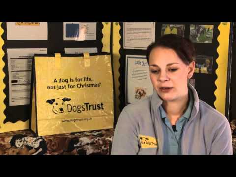 Short Documentary on the Dogs Trust