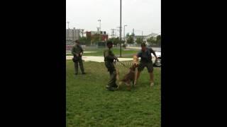Atlantic County Sheriff K-9 Unit Visits Day Camp