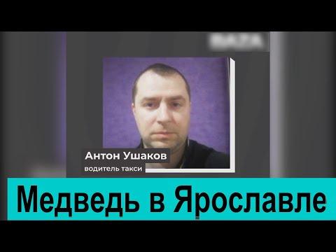 Таксист, спасший жителя Ярославля от медведя, рассказал, как ему это удалось
