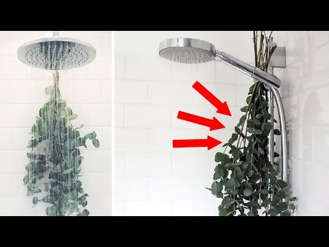 Here's Why You Should Be Hanging Eucalyptus in Your Shower