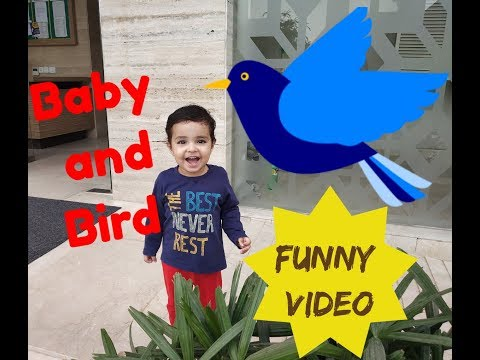 Baby Funny Video |Baby and Bird Vlog | Tanvi Diaries