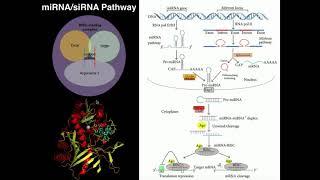Gambar cover RNAi: Gene Regulation via miRNAs & siRNAs