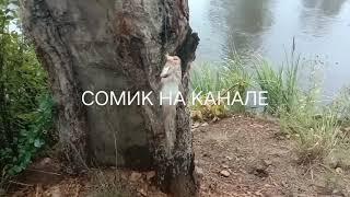 Рефтинское водохранилище Рыбалка 5 6 июля Сомик на канале