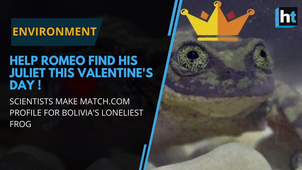 Bolivia's loneliest frog: Help Romeo find his Juliet this Valentine's Day