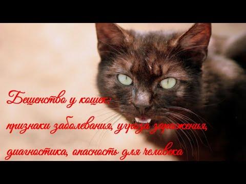 Бешенство у кошек: признаки заболевания  Rabies in cats: signs of the disease