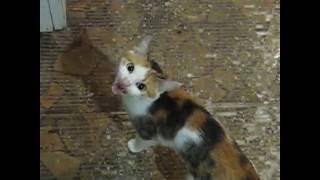 Кошка Кузя утром просит много есть 33 -:)