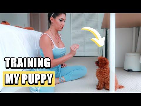 HOW I TRAIN MY DOG Training my puppy