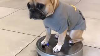 #meme#funny #humor #comedy Cute Pet Animal Funny Moment Happy Time Video 387