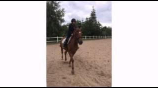 Stadnina koni runowo turnus I